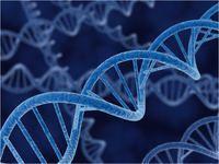 Expression vectors, pET-41 DNA